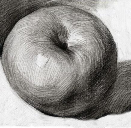 对,你知道苹果的结构是这样的,但你有想过苹果结构为什么是这样分吗?